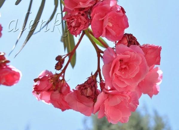 Стараясь не пропустить изумительные цветы монастыря,мы поочередно снимаем цветок за цветком, переша... - 2