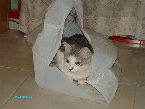 Любочка, классные какие котятки - чудо - 2