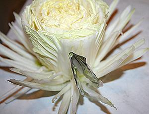 карвинг хризантема из пекинской капусты